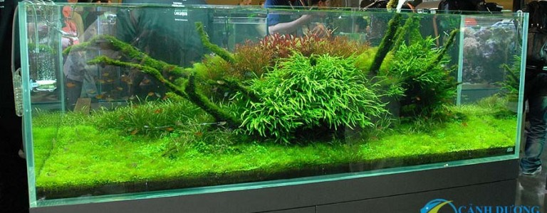 Nature-Aquarium