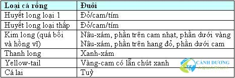 cach-chon-ca-rong2