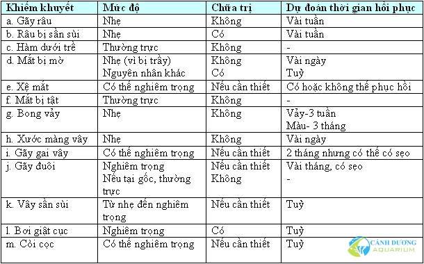 cach-chon-ca-rong3