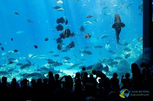 georgia-aquarium-02-1