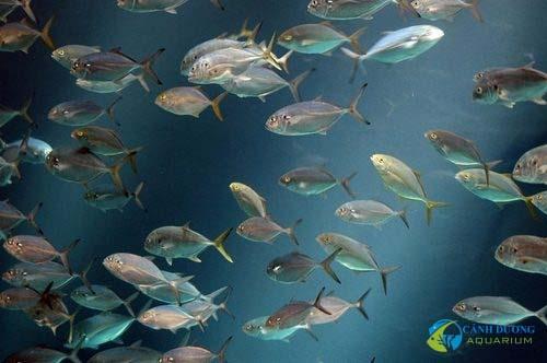 georgia-aquarium-112