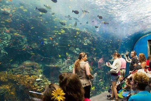 georgia-aquarium-12-1