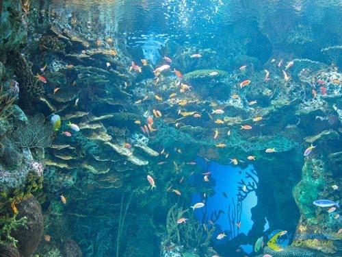 georgia-aquarium-142