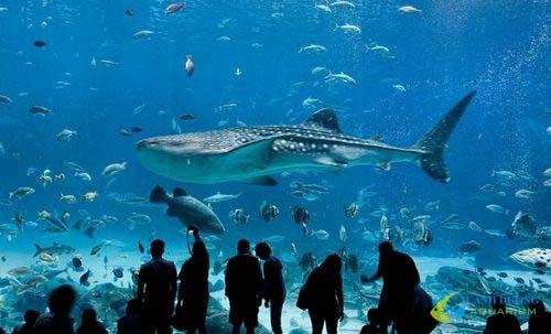 georgia-aquarium-710