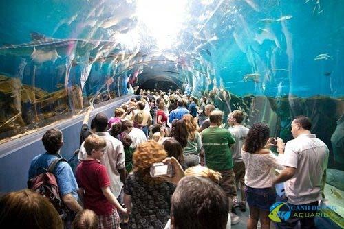 georgia-aquarium-93