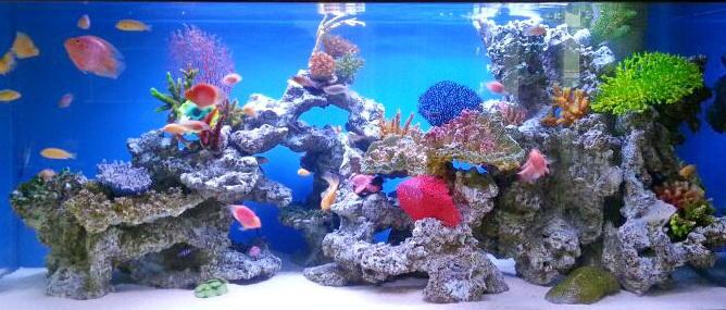 bể cá nước biển đẹp