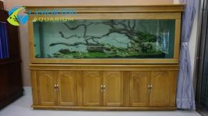 Hồ cá rồng 7