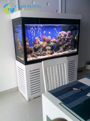 Hồ cá cảnh biển do Cảnh Dương thi công thiết kế