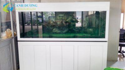 ho-ca-rong-20