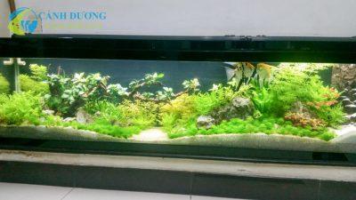 Hồ thủy sinh Cảnh Dương