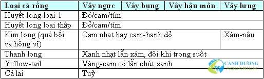 cach-chon-ca-rong1