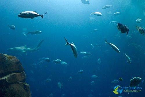 georgia-aquarium-122