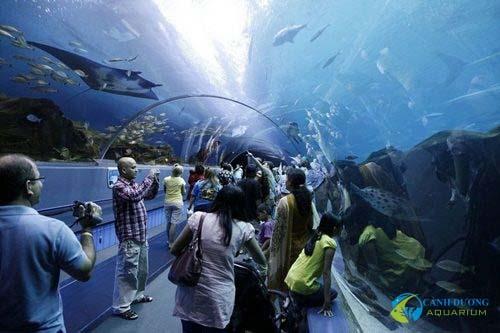 georgia-aquarium-82